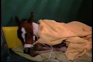 uf-neonatal-equine-unit-by-donna-green-townsend-mp4-still001