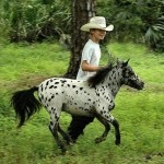 mini horses 3