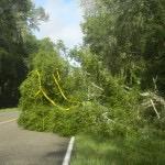 Tree-fell-on-CR-346-near-Micanopy-1024x768