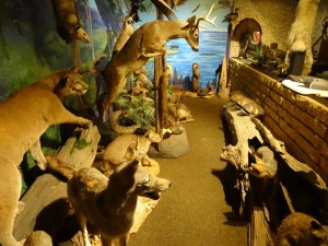 Animal Exhibit at Yearling Restaurant (1)